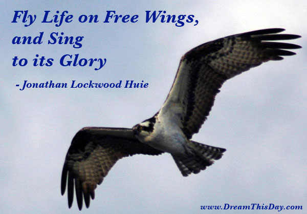 Daily Inspiration Daily Quotes Fly Life On Free Wings And Sing Adorable Free Daily Quotes